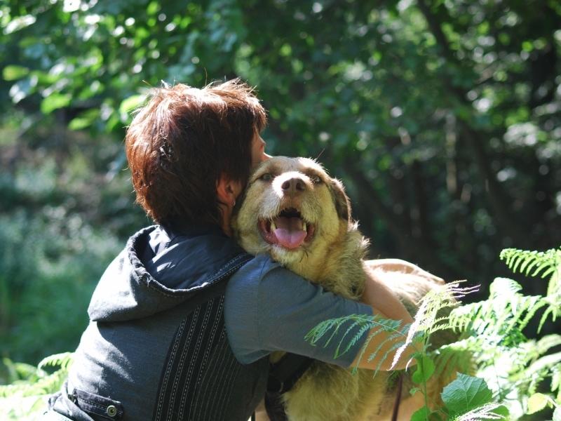 Brittas-Hundeparadies-Anfrage-1